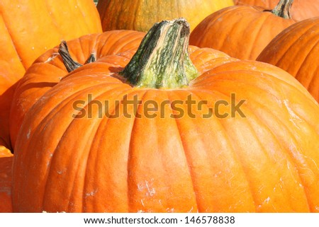 Large pumpkins - stock photo