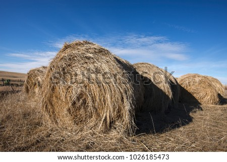 Large round bundles of hay on a clear day near Davenport, Washington.