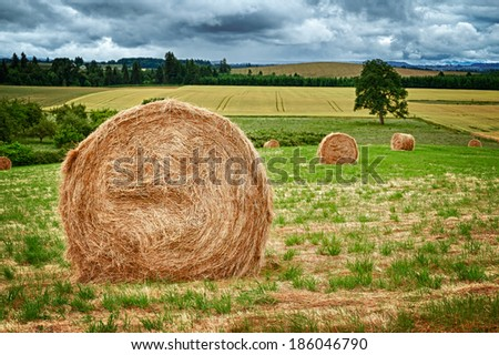 Large round hay bales in the field in Willamette Valley, Oregon