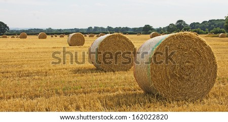 Large round straw bales in a field - stock photo