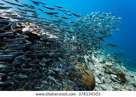 Large school of fish on coral reef