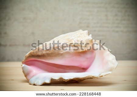 Large sea shell beige and pink