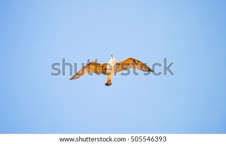 large seagull soars high in the sky