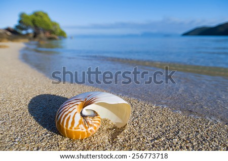 Large seashell washed up on the beach, Orpheus Island, Queensland  - stock photo