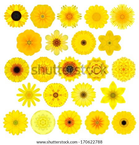 Large Selection of Various Colorful  Kaleidoscopic Mandala Flowers Isolated on White. Big Collection of flowers in Concentric shape pattern. Rose Flowers in Yellow, Orange colors. - stock photo