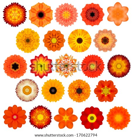 Large Selection of Various Colorful  Kaleidoscopic Mandala Flowers Isolated on White. Big Collection of flowers in Concentric shape pattern. Rose, Daisy Flowers in Red, Yellow, Orange colors. - stock photo