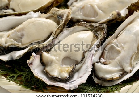 Large-sized true oyster from Japan - stock photo