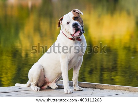 large smooth-haired white dog with brown spots on head is sitting on a background of lake