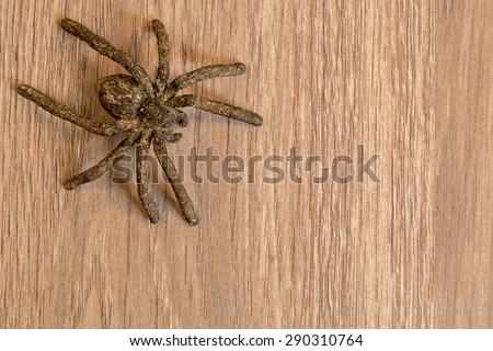 Large spider shot close up in macro style - stock photo