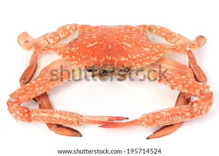Large steamed crab cooked in red, orange and white on a white background. - stock photo