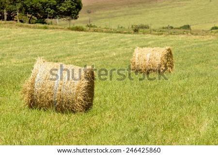 Large straw bales standing in the hot sun  - stock photo