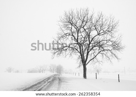 Large Tree and Country Road during Snow Storm - stock photo