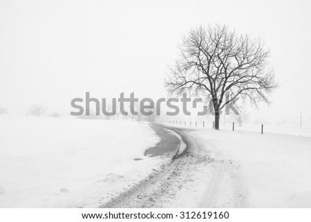 Large Tree and Fence on Country Road during Snowstorm - stock photo