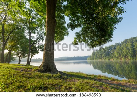 Large tree by the side of a lake on a clear summer morning