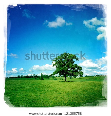 Large tree in grass field - stock photo