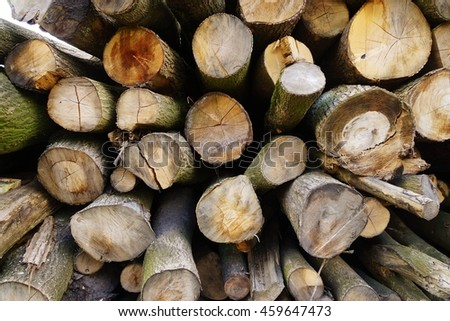Large tree trunks in a forest