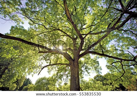 Large tree with green foliage