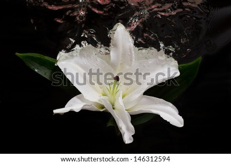 Large white flower on the liquid boundary