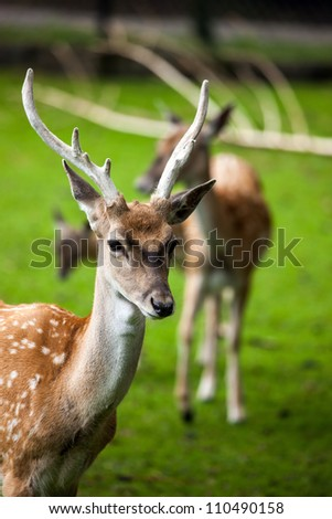 Large whitetail buck in the woods - stock photo