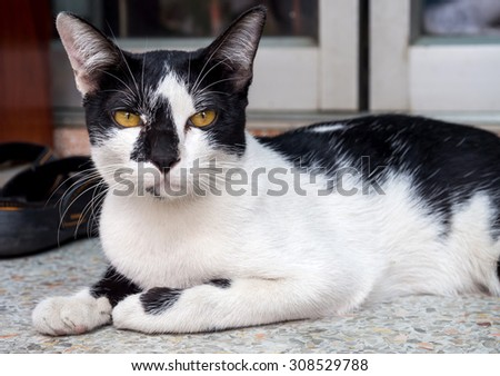 Large yellow eye, black and white cat on floor, selective focus on its eye - stock photo