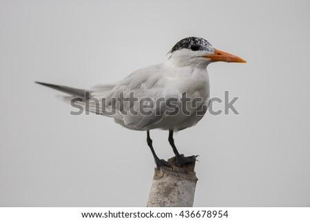 Laridae - stock photo