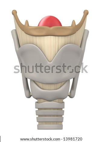 larynx anatomy - stock photo
