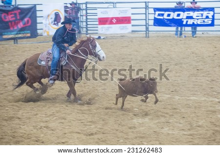 LAS VEGAS - NOV 05 : Cowboy Participating in a Calf roping Competition at the Indian national finals rodeo held in Las Vegas, Nevada on November 05 2014