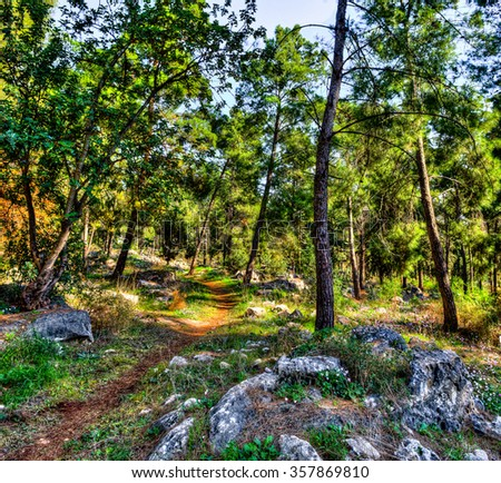 Last autumn flowers blossomed along the paths between pine trees and rocks in the woods - stock photo