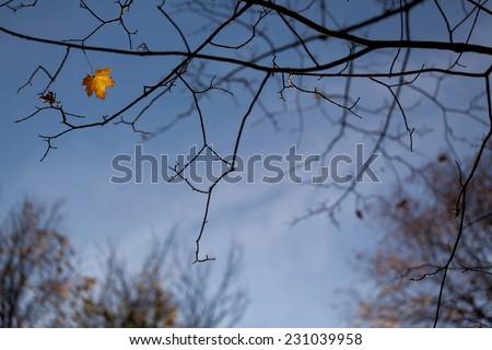 Last autumn leave on tree against blue sky - stock photo