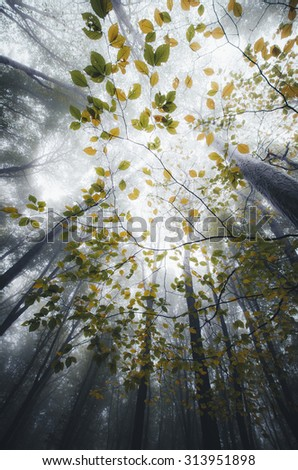 last leaves on tree branches in misty forest - stock photo