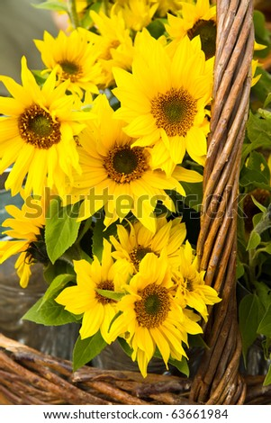 Last of the summer sunflowers in a basket - stock photo