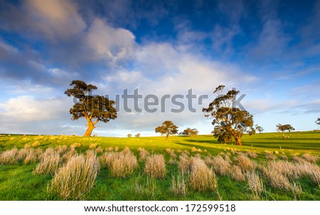 Late afternoon in the Clare Valley - stock photo