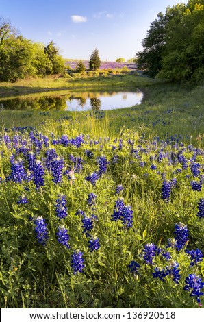 Late afternoon view of a wildflower field behind a Texas winery - stock photo