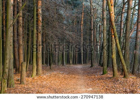 late autumn in the forest. Trees covered with hoarfrost - stock photo