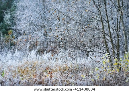 Late autumn lanscape. Trees and plants on a meadow covered with hoarfrost.