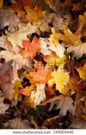 Late Fall Leaves Background - Nature Photo Background.