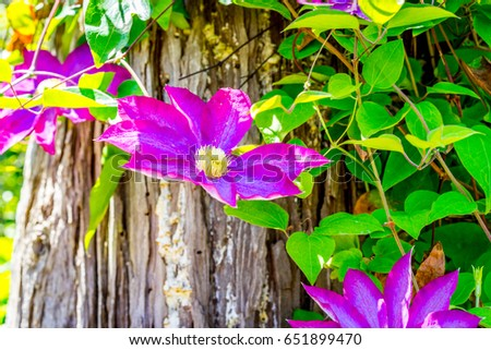 Late spring flowers stock photo royalty free 651899470 shutterstock late spring flowers mightylinksfo