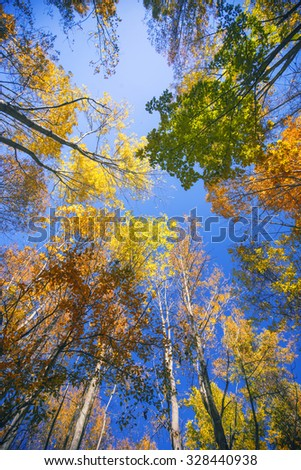 Late summer-fall view of sun shining through a canopy of tall trees with colorful autumn foliage. Low Angle View. Taken in Ontario, Canada.