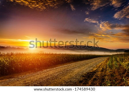 Late summer foggy morning near a corn field - stock photo