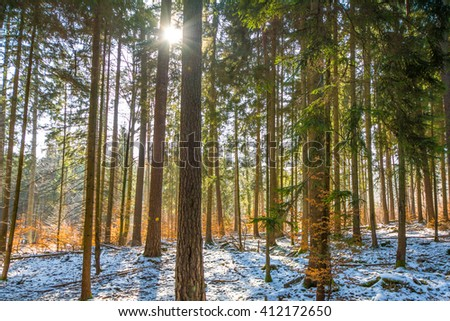 Late Winter sunlight breaking through the trees in a Schonbuch Forrest close Tübingen,Germany - stock photo