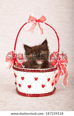 Laughing chattering Valentine theme kitten sitting inside white basket decorated with red hearts and red bows on silver background - stock photo