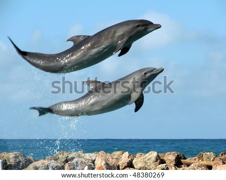 Laughing Dolphins. Slight motion blur