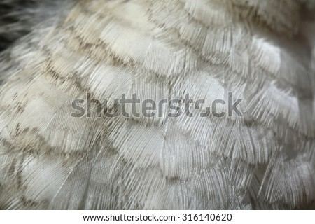 Laughing kookaburra (Dacelo novaeguineae) plumage texture. Wild life animal.  - stock photo
