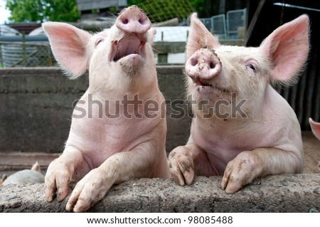 Laughing Pigs on side of pigsty - stock photo