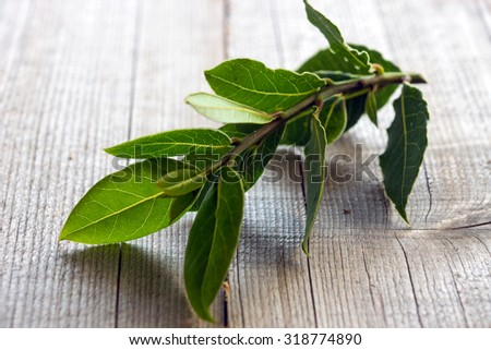 Laurel bay leaves on a wooden background  - stock photo