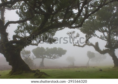 Laurel Forest in Madeira, Portugal - stock photo