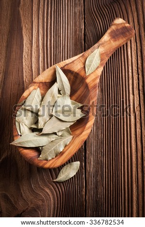 laurel leaves - stock photo