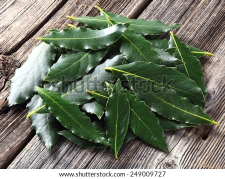 Laurel leaves on a wooden background