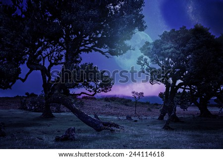 Laurel tree on high mountain plateau by night - stock photo