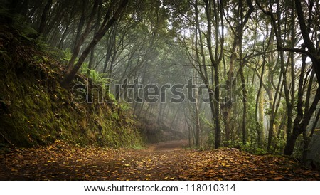 Laurel tropical forest - stock photo